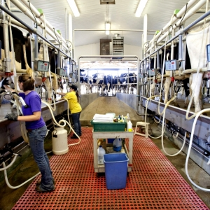 Student at work in Stateland Dairy
